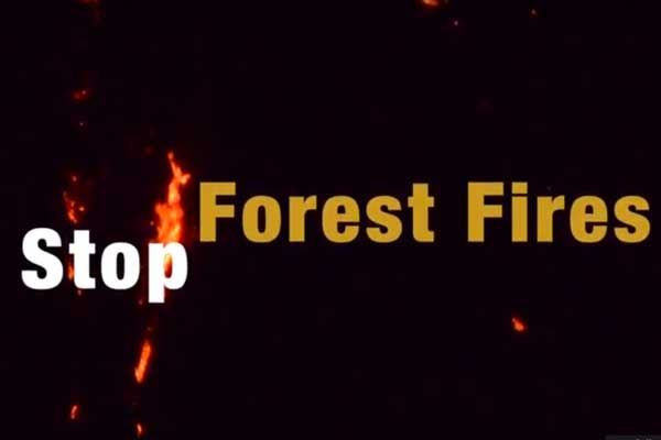 Fighting forest fires around the Great Himalayan National Park - Tirthan valley