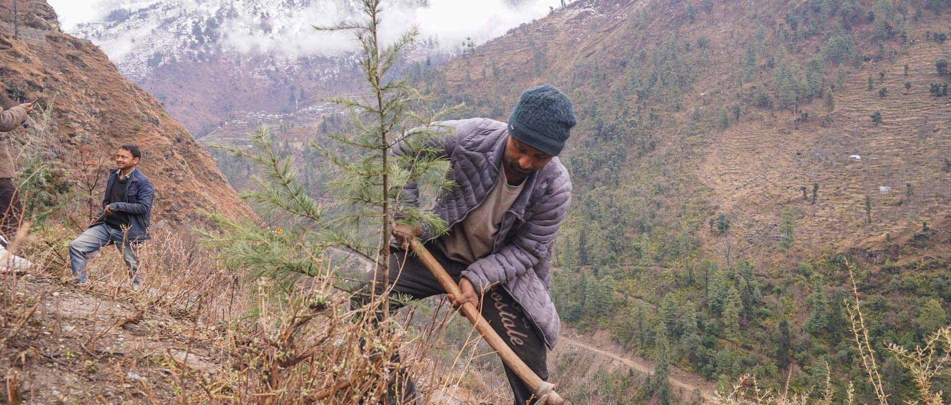 Our reforestation program in the Himalayas