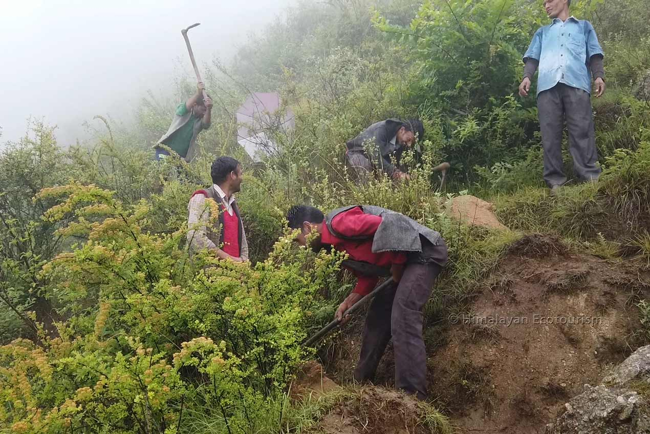 reforestation program in the Himalayas