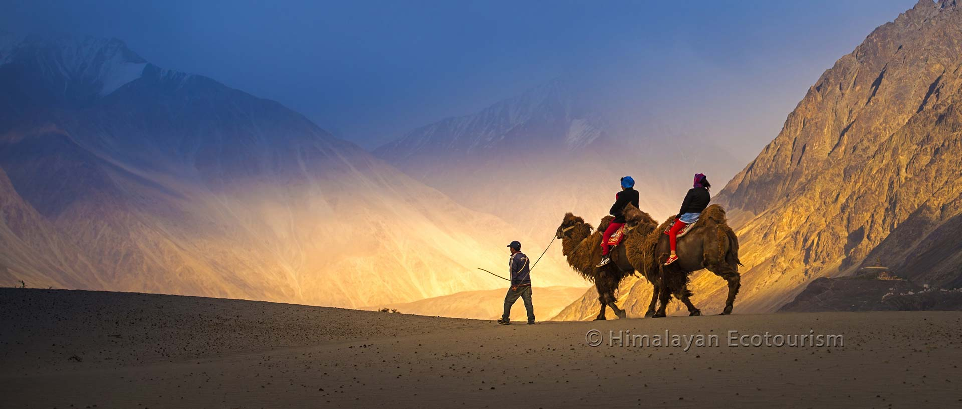 Camel riding in the Nubra valley, Ladakh