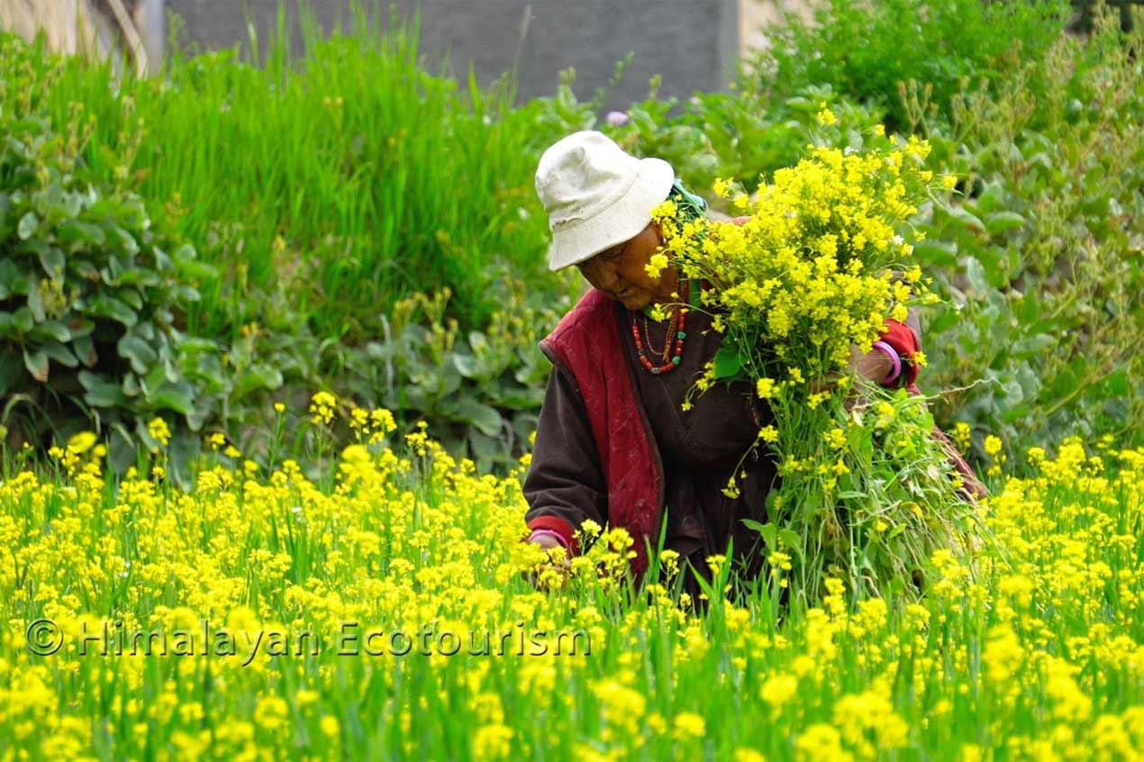 Villageois travaillant dans les champs