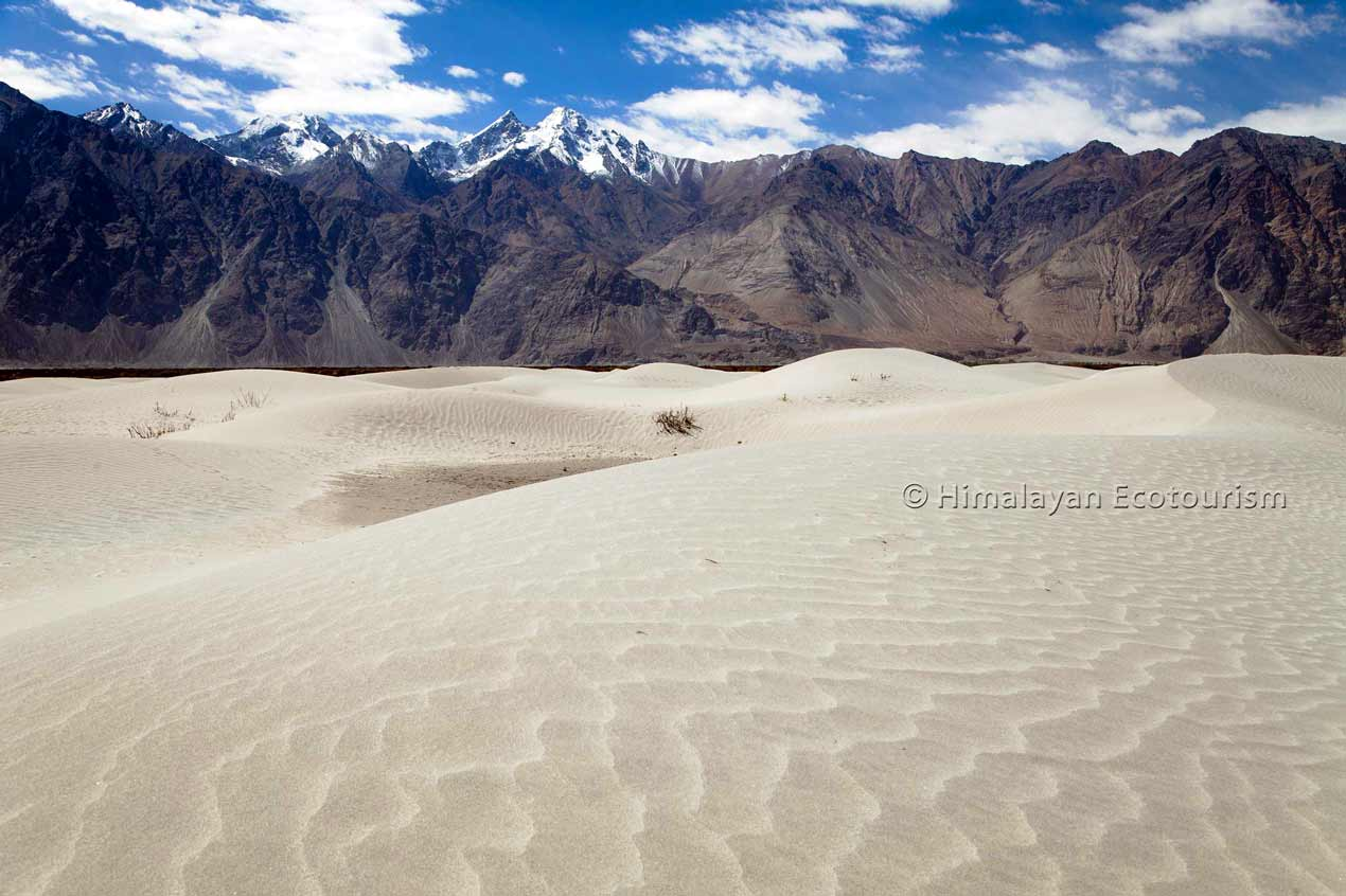 Sand dunes of Nubra valley